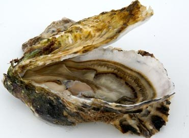 Oester gezond